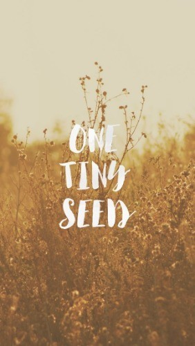 Image result for mustard seed